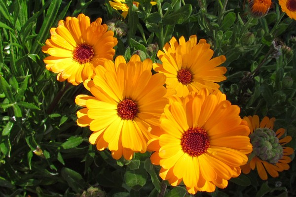 Nature photography by richard l bowman flower blog yellow daisies mightylinksfo